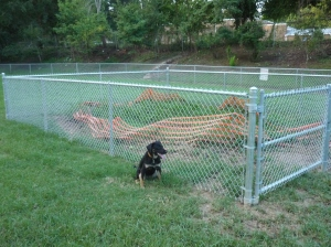 The new fence to keep dogs mud free