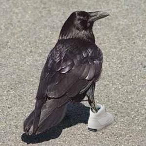ravenshoes